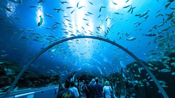 Post image Great Museums in Atlanta Georgia Aquarium - Great Museums in Atlanta
